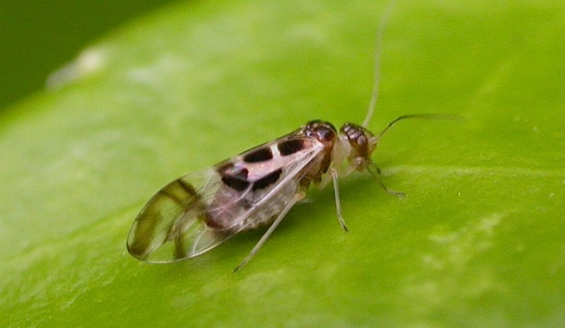 Limpiar de insectos los alimentos