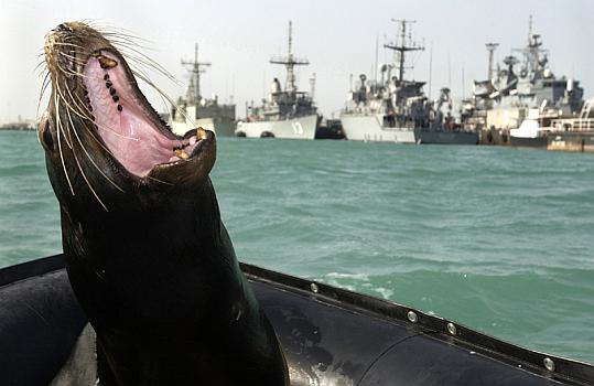 León marino de la US Navy