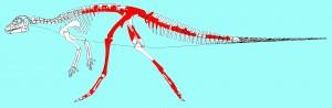 Reconstrucción del 'Gideonmantellia' con los huesos hallados en rojo