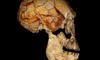 Cráneo de Koobi Fora