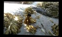 En el vídeo se ve a una niña muy pequeña trabajando con hojas de tabaco.