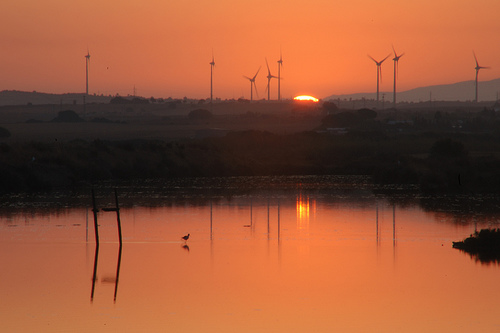 Turbinas en las marismas