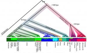 Diagrama de las poblaciones analizadas y sus fechas de divergencia