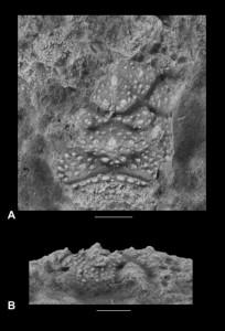 Una especie desconocida con un caparazón en el que se dibuja un rostro humano