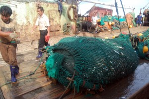RS8594_Illegal trawlers fish for months at a time, and will bring in several net loads of fish each day (c)EJF-lpr