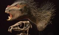 Reconstrucción artística de un heterodontosaurio