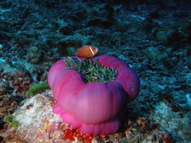 Comunidades coralinas de las Islas Maldivas