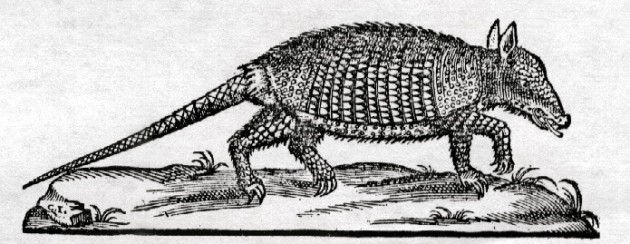 Un armadillo dibujado por la expedición de Francisco Hernández