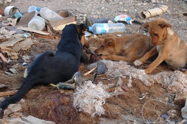 Perros en la basura