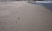 Galletas de chapapote aparecidas en la playa de O Rostro en septiembre de 2011