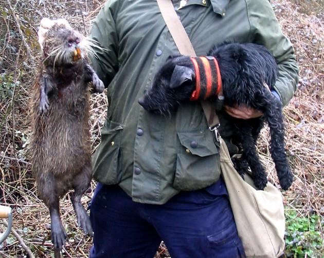 Un ejemplar de coipú cazado en EEUU