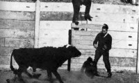 Delgado detiene la embestida del toro en su célebre experimento de 1963