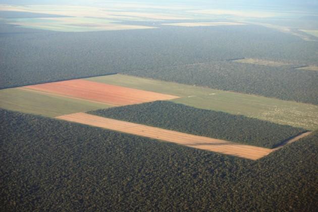 Deforestación amazónica
