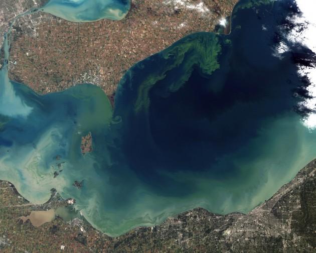 Proliferación de algas tóxicas en el lago Erie, en octubre de 2011