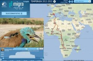 Ruta de 15.000 kilómetros por África de una carraca marcada en Lleida en 2012