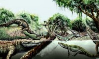 Reconstrucción de diversas especies de cocodrilos del Mioceno en América