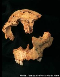 Restos fósiles del chico de la Gran Dolina de Atapuerca