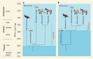 Divergencias en las Implicaciones evolutivas de los haramíyidos