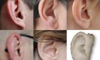 La nueva técnica permite crear orejas idénticas a las humanas