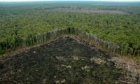 Selva talada ilegalmente fuera de las concesiones de APP, en Riau (Sumatra)