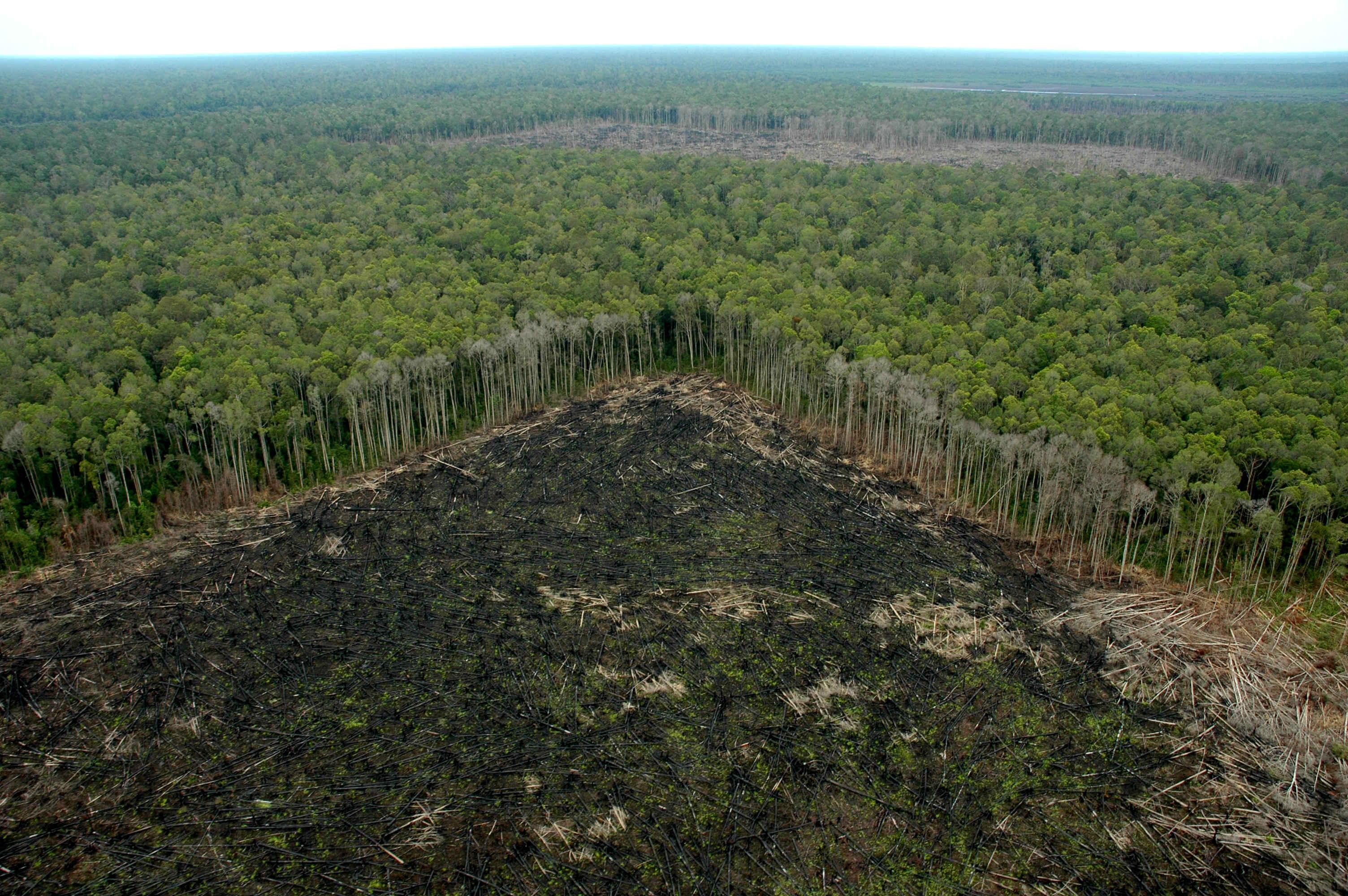 No m s selvas arrasadas en indonesia para fabricar papel higi nico para eeuu materia - Mas goy fornells de la selva ...