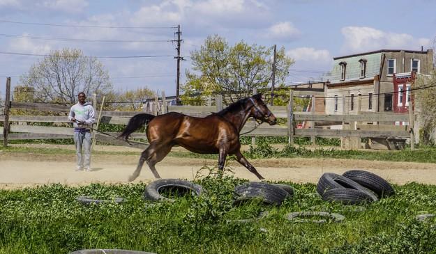 Un hombre entrena a un caballo en el gueto de Filadelfia