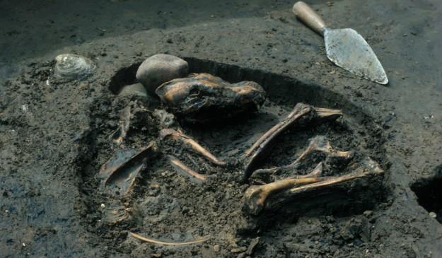 Enterramiento canino de hace 8.500 años hallado en Illinois (EEUU).