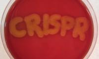 El nombre de la técnica CRISPR, en una placa de Petri