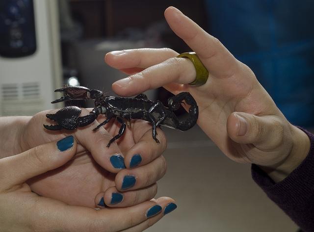 b1502e0f9c4b Empresas que pueden tratar la picadura del escorpión o el cáncer de ...