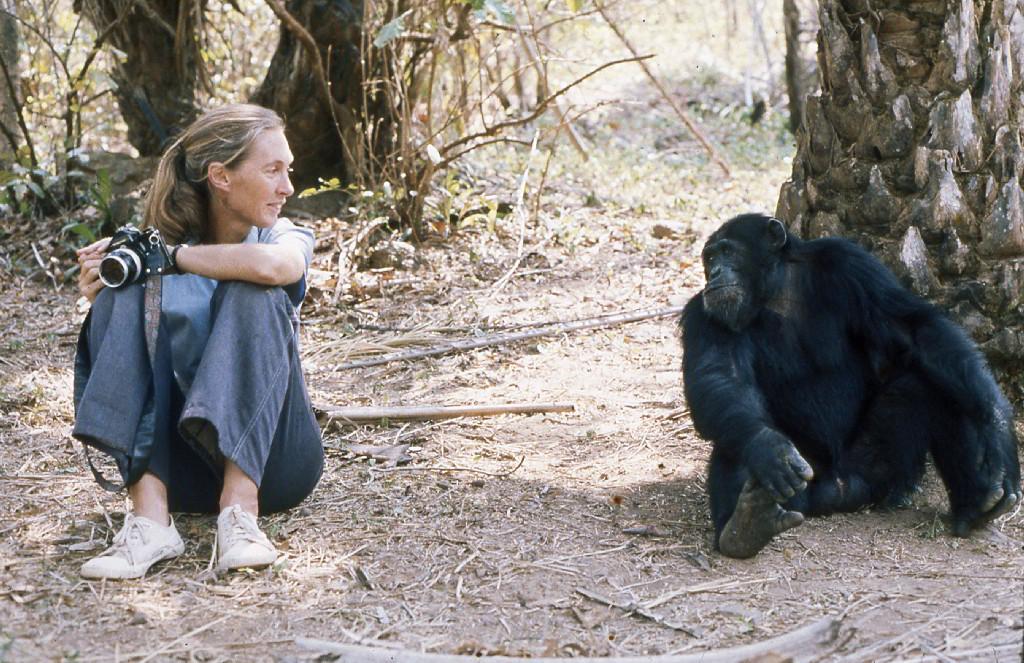 El cruel asesinato que desató la primera guerra entre primates no humanos de la historiaQuizás te interesen...Los chimpancés matan porque son violentos por naturalezaLos monos salvajes que aprendían con tutoriales en vídeoLas 10 películas de perros que más han alterado las razas caninas del mundo