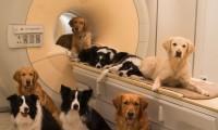 Los perros podrían captar el estado de ánimo a partir de las voces de las personas.