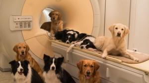 Perros en el laboratorio