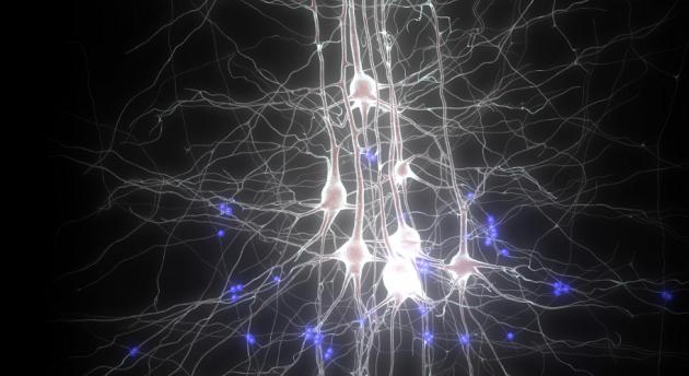 Conocer el funcionamiento del cerebro es el gran reto de este siglo.