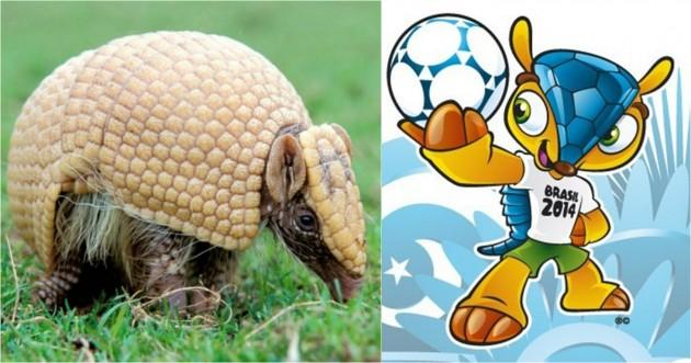 Un armadillo de tres bandas junto a Fuleco, la mascota del Mundial de Brasil.