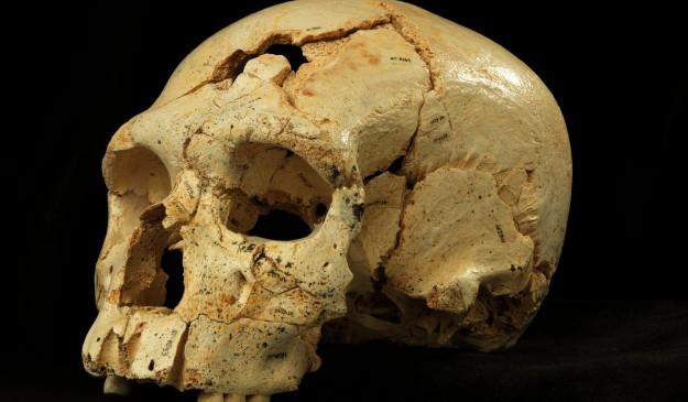 Uno de los cráneos de la Sima de los Huesos