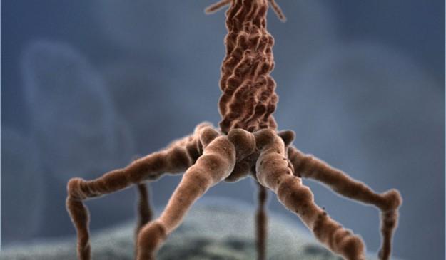 Un bacteriófago