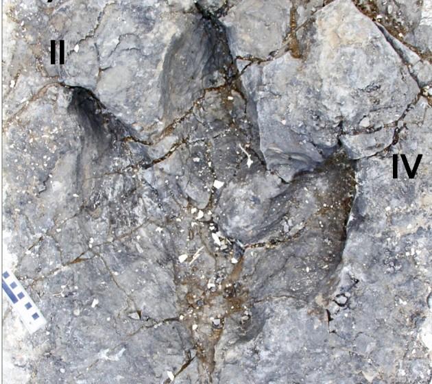huellas de tiranosaurios en Canadá
