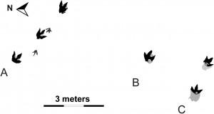 Huellas dinosaurios diagrama