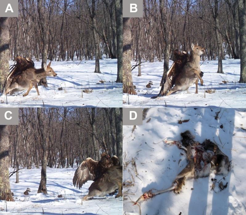 Capturado el instante de la caza